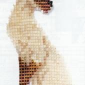 Siamese Cat - Patterns by Jill Oxton