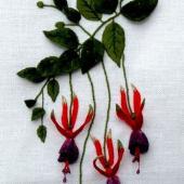 Fuchsia - Tom Thumb by Bets Maas