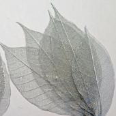 Skeleton Leaves Silver
